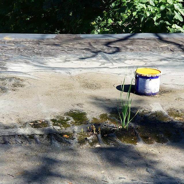 Mold testing in the yard